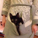 Pasaule kļūtu labāka, ja katram kabatā būtu pa kaķēnam 10