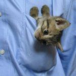 Pasaule kļūtu labāka, ja katram kabatā būtu pa kaķēnam 2