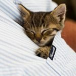 Pasaule kļūtu labāka, ja katram kabatā būtu pa kaķēnam 13