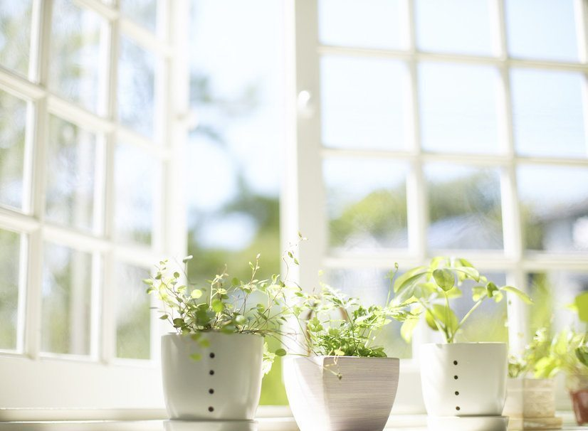 Istabas augu maģija. Kā pievilināt laimi?