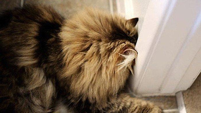 Ja pamani, ka tavs mīlulis dara ŠĀDI - nekavējoties ved viņu pie veterinārārsta! 5