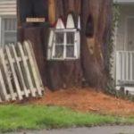 Varas iestādes pieprasīja nocirst veco koku, kā rīkojās šī sieviete? 5
