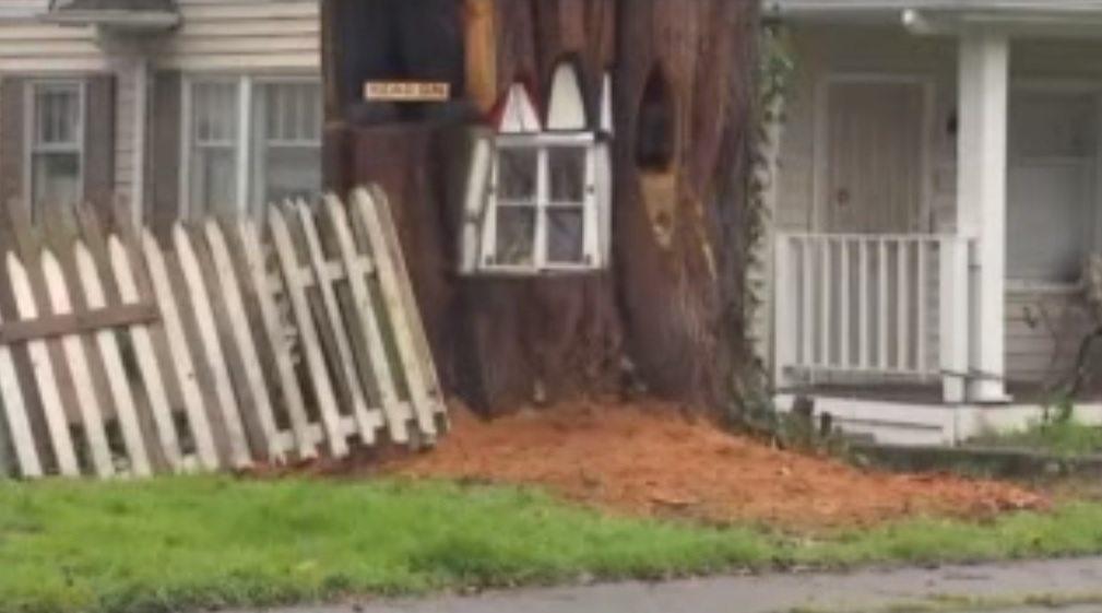 Varas iestādes pieprasīja nocirst veco koku, kā rīkojās šī sieviete? 1
