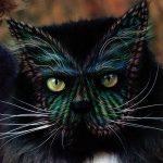 5 kaķu body-art piemēri. Ko tu par to domā? 2