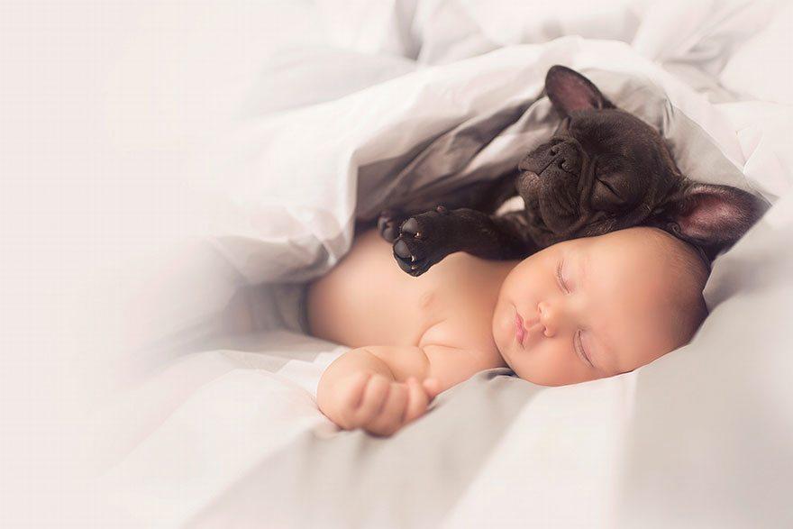 Mazulis un kucēns piedzima vienā dienā un tagad viņi domā, ka ir brāļi 1