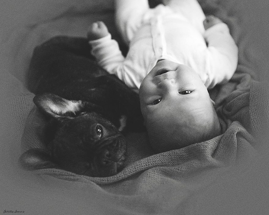 Mazulis un kucēns piedzima vienā dienā un tagad viņi domā, ka ir brāļi 5