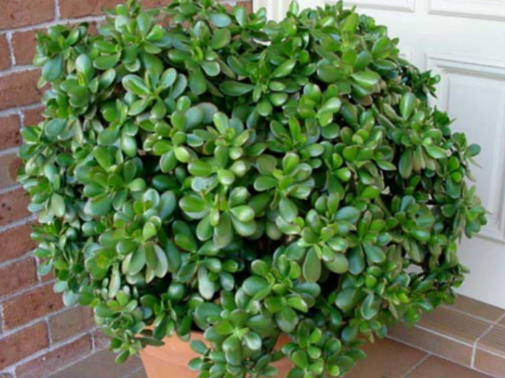 Visticamāk, ka kāds no šiem augiem ir arī Tavā mājā. Mācāmies tos izmantot pareizi!