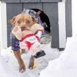 Šis suns 5 gadus gaidīja, kad viņu izņems no patversmes. Bet pēc tam ''uzrakstīja'' vēstuli 8