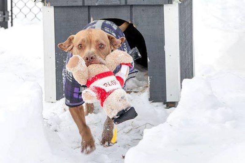 Šis suns 5 gadus gaidīja, kad viņu izņems no patversmes. Bet pēc tam ''uzrakstīja'' vēstuli 1
