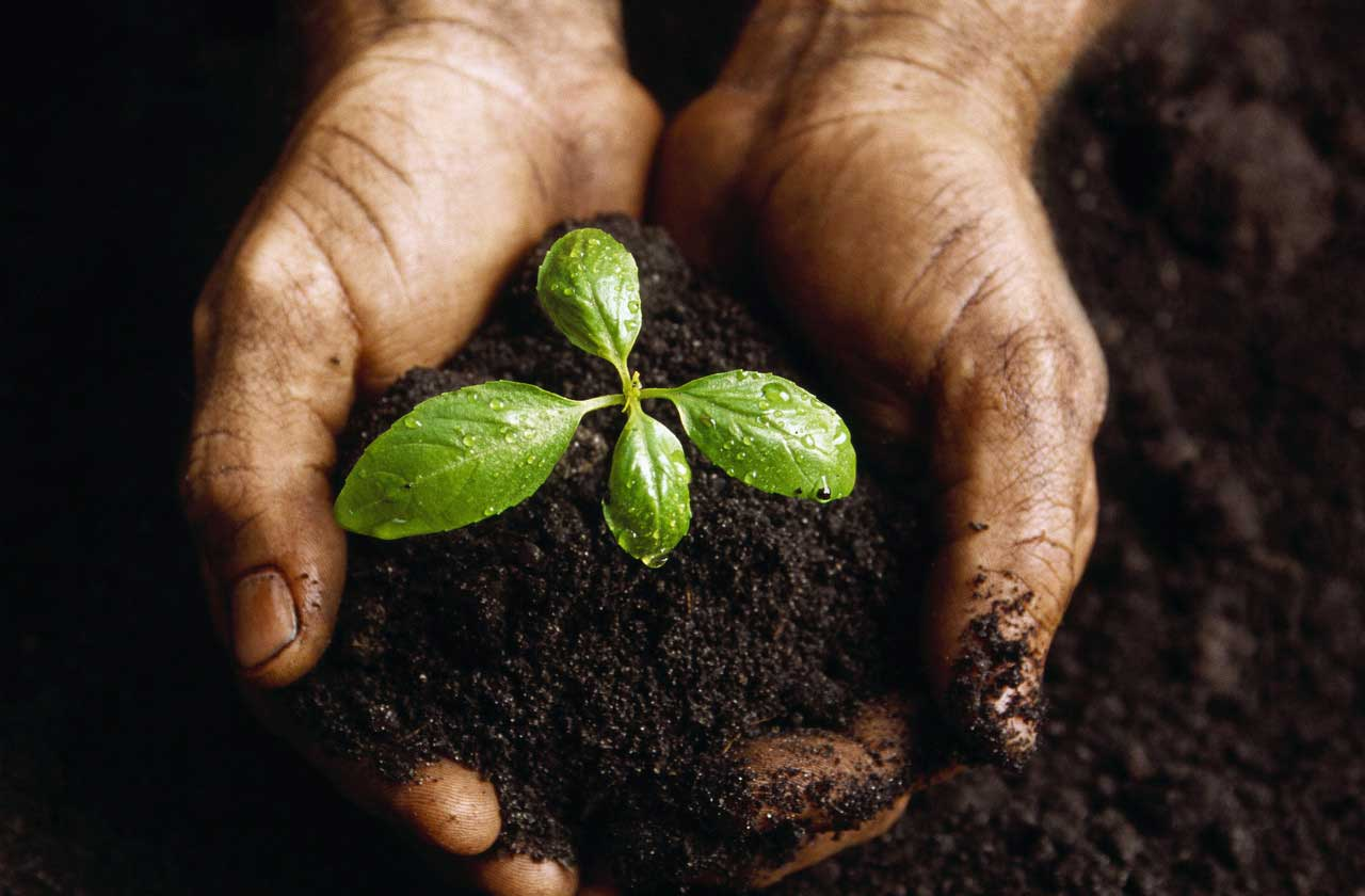 Uzzini kāda piebarošana taviem augiem patiks vislabāk!