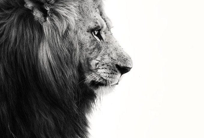 30 iemesli, kāpēc neviens nevar dzīvot bez Lauvām