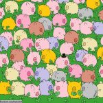 tired-of-pandas-try-to-find-a-four-leaf-clover__605