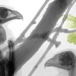 Buzzards, X-ray