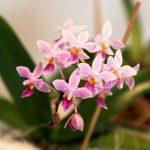 orhidejas_kukainedaji-augi12_LET-664×438