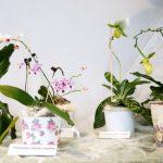 orhidejas_kukainedaji-augi13_LET-664×431