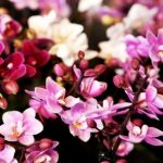 orhidejas_kukainedaji-augi21_LET-664×445
