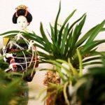 orhidejas_kukainedaji-augi_LET-664×431