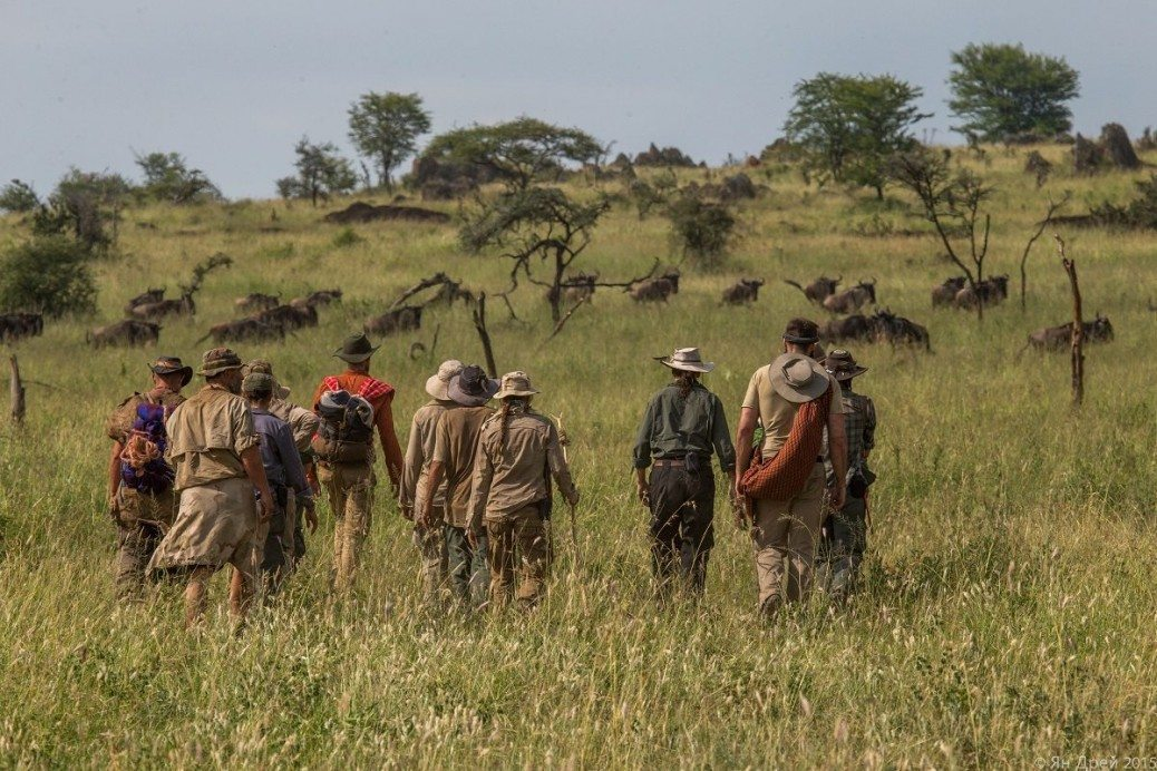 TANZANIA, AFRICA - Human herd walking with a herd of wildebeests. (Photo Credit: National Geographic Channels/Natasha Kutukova)