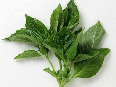 10-essential-herbs-to-grow-basil-01-sl