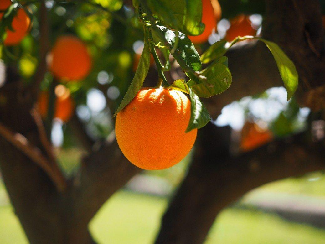 apelsins