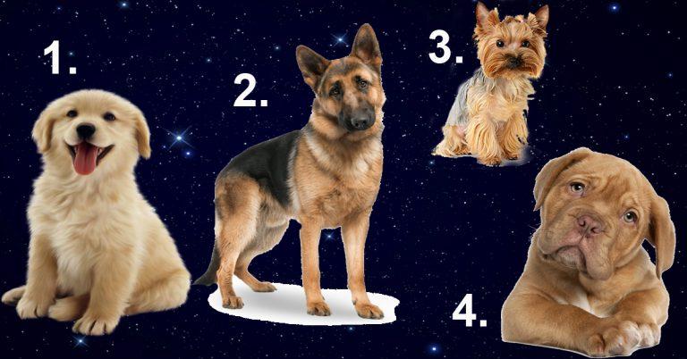 Tests: Izvēlies suni un uzzini, kāds vīrietis tev ir vajadzīgs