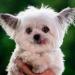 Īsts brīnums, unikāls terapijas suns! (+VIDEO)