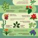 TOP 10 indīgie istabas augi